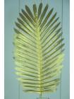 Лист пальмы 63 см