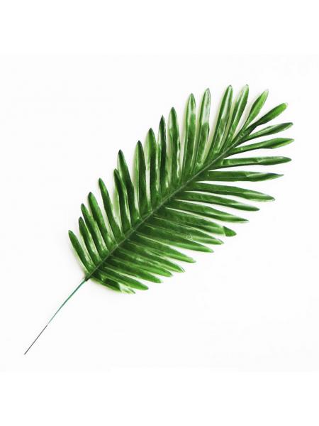 Листья тропических растений №5