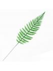 Листья тропических растений №6