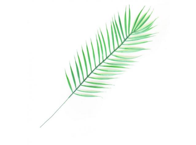 Листья тропических растений №7