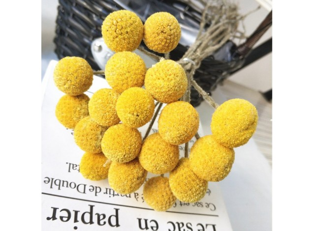 Сухоцвет Желтые шары на ветке