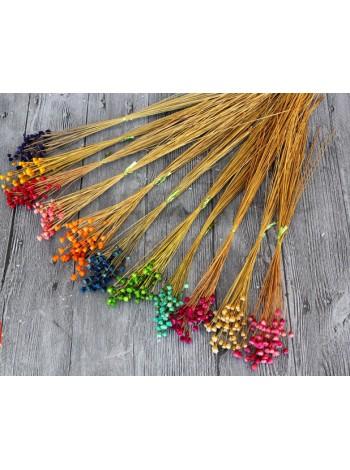 Василек высушенный разноцветный